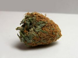 nj bud no.1 by MEANINGLESSexistance