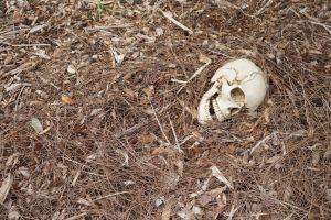 Human Skull 004 - HB593200 by hb593200