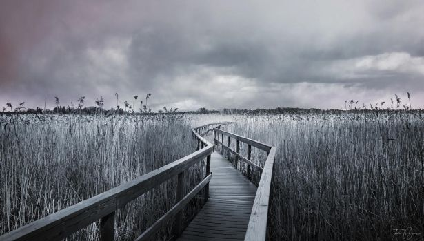 The Path by Pajunen