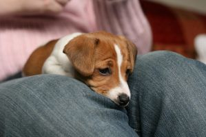 Puppy Stock 4 by Random-Acts-Stock
