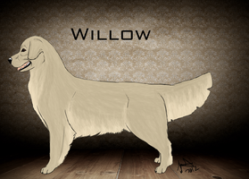 Ch. Joesse small town gurl- Willow by joesse