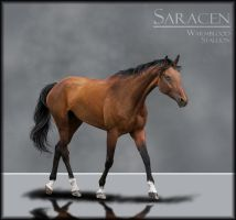 Saracen by xabovetheclouds