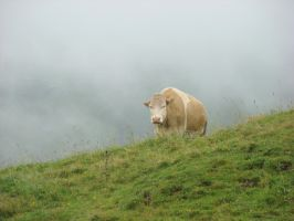 Cow in the mist by AmmarkoV1