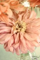 Pale Flower by FarorePhotography
