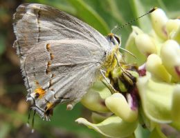 Butterfly Close Up by kikyo4ever