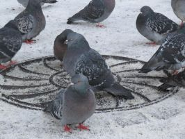 Pigeons on hatchway by BioGear