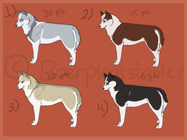 Siberian Husky Designs For Sale2 - Adoption by xMush-Kennelsx