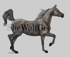 VHR: Dapple Grey Arabian by SheWolfGeo