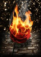 Rose on Fire by KirstenStar