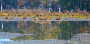 Swamp reflections 11-11-14 by Tailgun2009