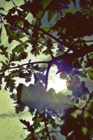 Leaves by thorneater
