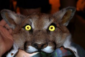 Sneak Peek: Cougar Headdress by NaturePunk