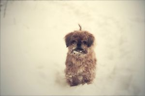 Barney in the snow by kailay