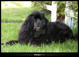 Newfoundland Blue by Sharpeshots
