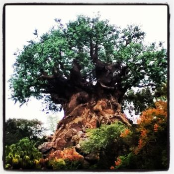 Tree of Life by Zzyzx1999