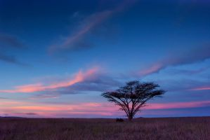 One tree in a pink sky by carlosthe