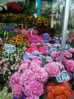 London Flower Markets by Chaos-Sister