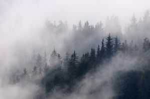 Foggy morning by JWFisher