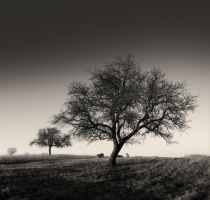 Three Trees and a Dog... by denis2
