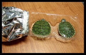 turtle food by yabbles