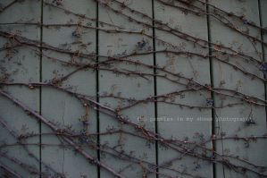 Lines and Vines by ThePenniesInMyShoes
