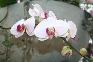nice white orchids by ingeline-art