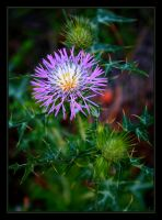 Wild Flower III by FilipaGrilo