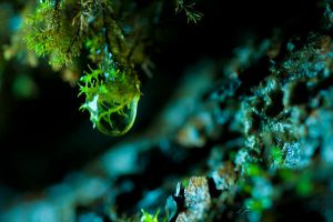 Life in a drop. by hlaurah