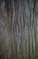 Textures - Trunk 2 by Monumnas-Stock