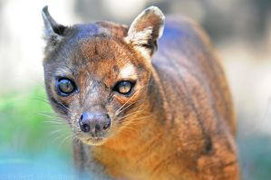 Aqua Fossa by robbobert