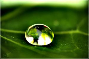 .WaterDrop. by WhiteSpiritWolf