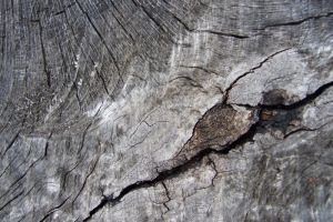 Wood Texture 4 by Mifti-Stock