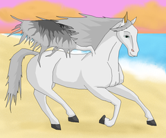 Sky Galloping on the Beach by T0pd0g