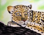 Leopard On Branch by ThereseDrawings