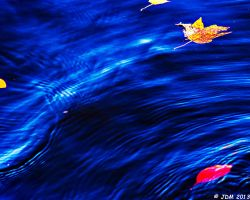 Leaves in the Ripples by JDM4CHRIST
