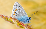 Butterfly Widescreen by Bhesi