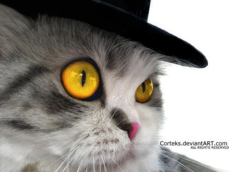 A cat in a hat by Corteks