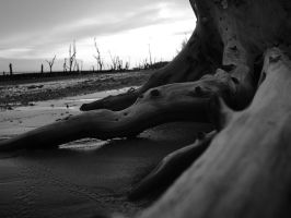 Uprooted II by SongYong