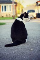 Sitting Cat. by pasofino6