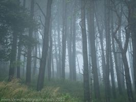 A Walk in the Clouds I by VelesPhotos