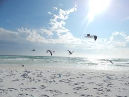 Flying Seagulls by superSeether