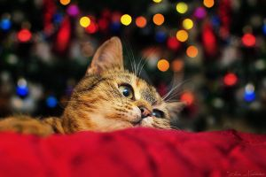 Waiting for Santa by ZoranPhoto