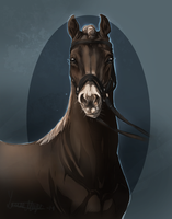 Royal West Warmblood, QuickSilver by Roiuky