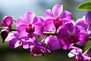 Beautiful  orchid flowers with back sunlight II by a6-k