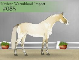 Import  85 by SweetStreamStables