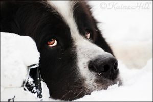 Eyck The Landseer by KaineHillPhotography