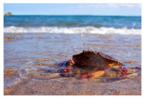 crabby in the water by an6el-of-death