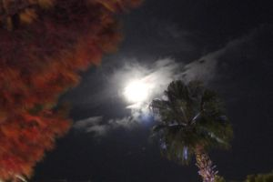 French Riviera by Moonlight 4 by Danelp