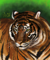 Sumatran Tiger by ArkadyRose