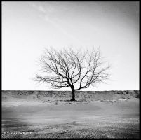 The tree 9 by orlibraorli